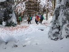 Tourists In Winter Wood Royalty Free Stock Photos