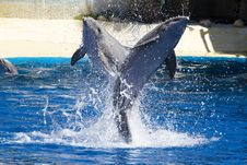 Free Dolphin Jump Out Royalty Free Stock Photo - 14524935