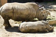 Free White Rhino (Ceratotherium Simum) Stock Photo - 14527280