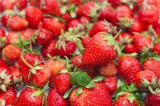 Free Fresh Ripe Strawberry Royalty Free Stock Photos - 14527438