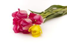Free Bouquet Of Tulips Stock Photo - 14528570