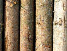 Free Tree Trunks Stock Image - 14528851