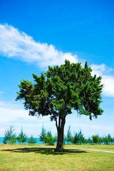 Free Single Tree On Green Grass With Blue Sky Stock Image - 14528901