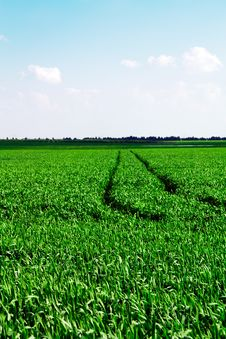 Agricultural Field With Traces From Cars Royalty Free Stock Image