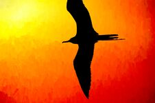 Bird Silhouette Flying Royalty Free Stock Photos