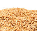 Free Mature Grains Of Wheat In A Peel Royalty Free Stock Photos - 14536958