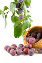 Free Still-life With Plums Stock Photo - 14538800