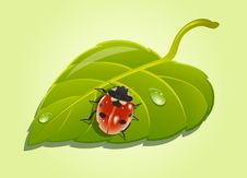 Ladybird On Leaf Stock Photos