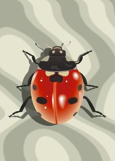 Free Ladybird Stock Photography - 14530062
