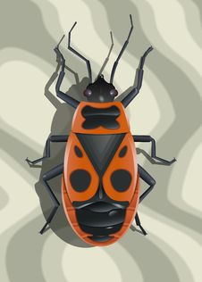 Red Soldier Bug Stock Photos