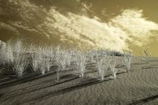 Free Infrared Dunes Royalty Free Stock Photography - 14530237