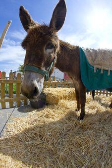 Free Farmland And  Donkey Head Portrait Stock Images - 14531314