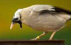 Free Beautiful Bird Royalty Free Stock Photos - 14531478