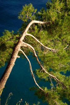 Free Tree Stock Photo - 14531890