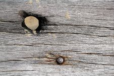 Free Weathered Wood With Knot Hole And Nail Royalty Free Stock Images - 14532049