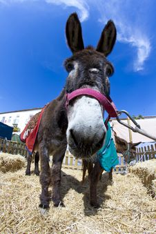 Free Farmland And  Donkey Royalty Free Stock Photos - 14532568