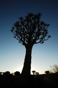 Free Sunset In The Quiver Tree Forest (Aloe Dichotoma) Stock Image - 14532761