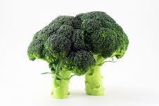 Ripe Broccoli On White Background Royalty Free Stock Images