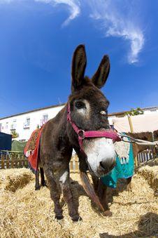 Free Farmland And  Donkey Royalty Free Stock Photography - 14532887