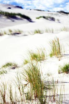 Free Sandy Dunes Near The Sea Royalty Free Stock Photos - 14532998