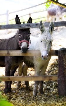 Free Donkeys Stock Photography - 14533412