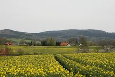 Rape Field In Spring, Hagen, Teutoburg Forest Stock Images