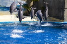 Dolphin Jump Out Stock Image