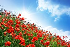 Free Poppies Hill Stock Photography - 14535962