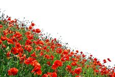 Free Isolated Poppies Hill Stock Images - 14536164