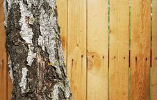 Free Trunk Of A Tree Stock Image - 14537831