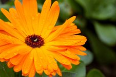 Free Daisy Stock Images - 14538534