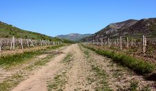 Free The Vineyard In The Crimea Mountain Stock Photos - 14539373