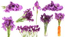 Free Set Flowers Irises,isolated. Stock Photos - 14539843