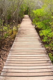 Free Walkway In Mangrove Forest, Thailand Stock Photography - 14539862