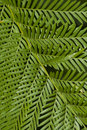 Free Fern Leaf Filling The Frame Stock Photos - 14543713