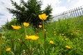 Free Yellow Wild Flowers Stock Image - 14547371