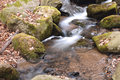 Free Forest Stream Stock Image - 14549621