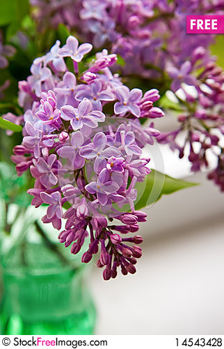 Free Lilac In Vase Royalty Free Stock Photos - 14543428