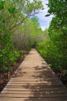 Free Walkway In Mangrove Forest, Thailand Stock Photos - 14540233