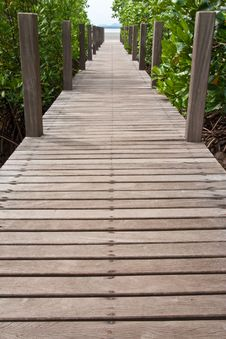 Free Walkway In Mangrove Forest, Thailand Royalty Free Stock Images - 14540369