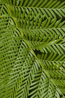 Free Fern Leaf Filling The Frame Stock Photos - 14543713