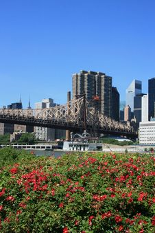 Free New York City Stock Photos - 14544043