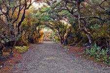 Free Park Alley Royalty Free Stock Photos - 14544488