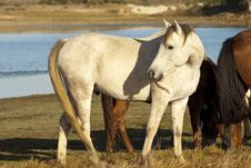 Brown And White Horses Stock Photos