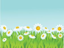 Free Summer  Background Stock Images - 14545474
