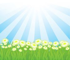 Free Summer  Background Royalty Free Stock Photography - 14545487