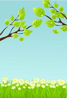 Free Summer  Background Stock Photography - 14545512