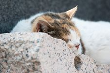 Free Cat Royalty Free Stock Images - 14545579
