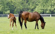 Free Horses Royalty Free Stock Image - 14545586