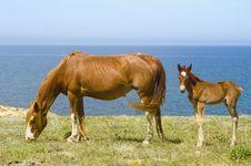 Free Horses Royalty Free Stock Photos - 14546278